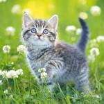 Kittens Jigsaw Puzzle Collection